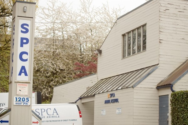You can find us at 1205 E 7th Avenue, in the same complex as the BC SPCA Vancouver Branch!